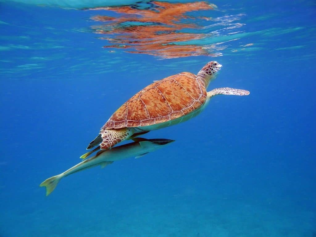 Caribbean Crewed Yacht Charters Turtle